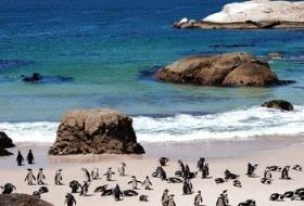 南以迪挡南非迪拜10日游(开普敦、好望角、比林斯堡野生动物区、棕榈岛、阿布扎比)