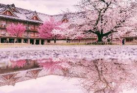 奢享の东瀛五星日本富士和风浪 漫樱花6日游 江西到日本旅游   编号:385